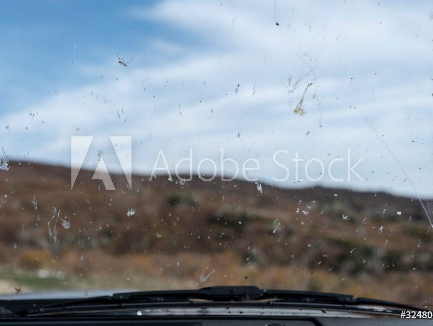 Jak zmyć owady z auta?